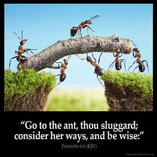 Proverbs_6-6: Go to the ant, thou sluggard; consider her ways, and be wise
