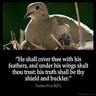 Psalms_91-4: He shall cover thee with his feathers, and under his wings shalt thou trust: his truth shall be thy shield and buckler.